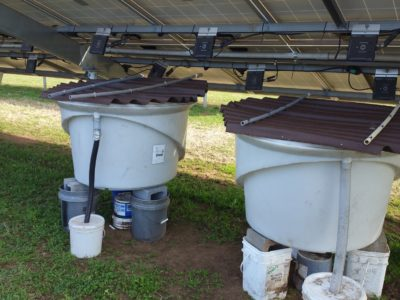 Black soldier fly bins